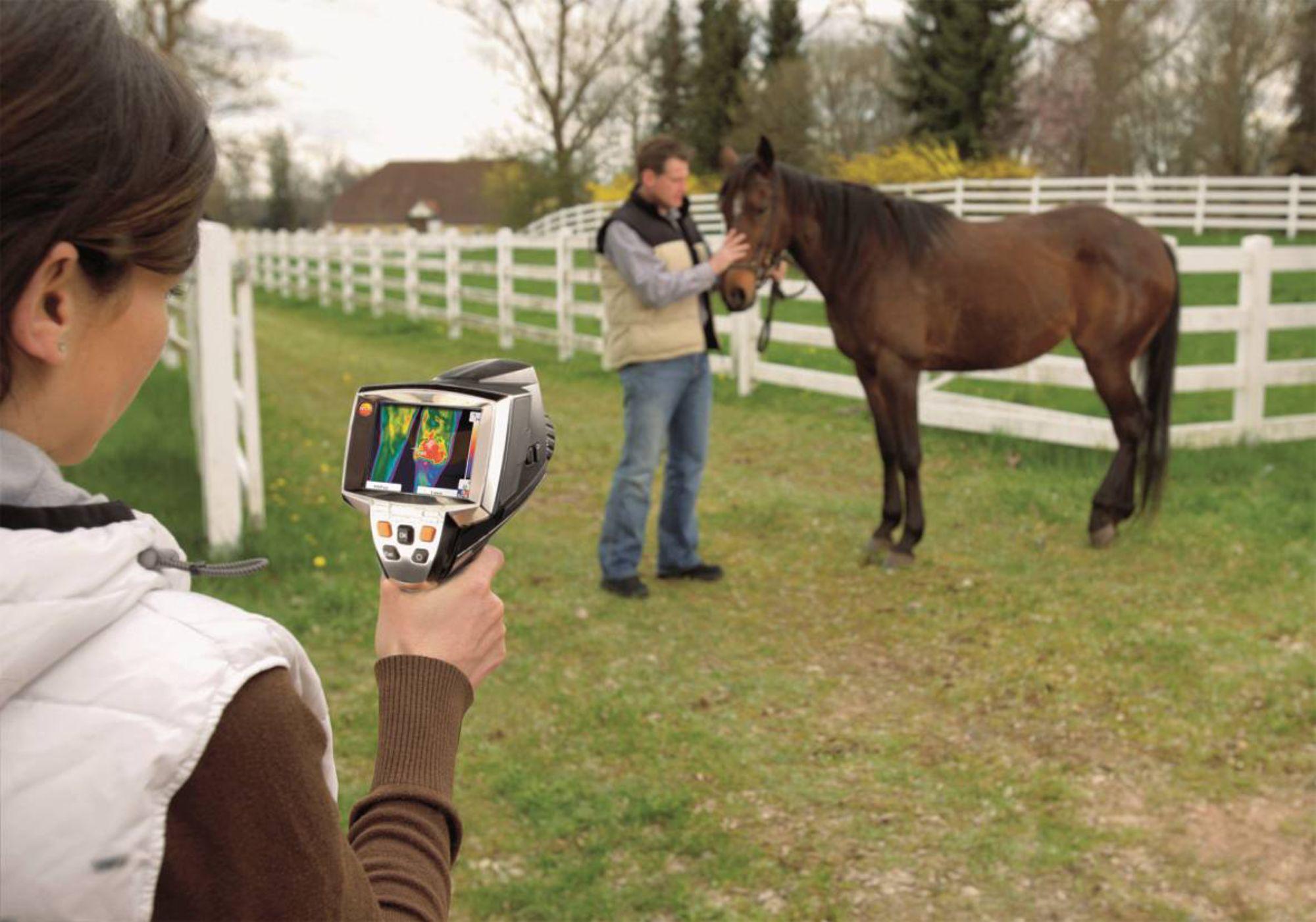Teaser-Pferdethermografie